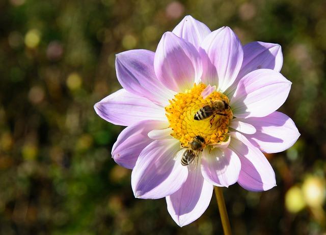 Dla pszczół – akcja edukacyjna w Galerii Bronowice | AwKrakowie.pl